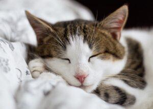 Ile kosztuje kremacja kota?